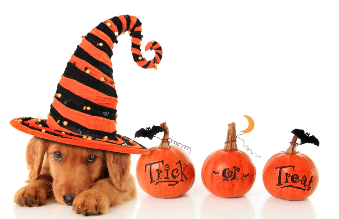 Halloween puppy dog safety tips
